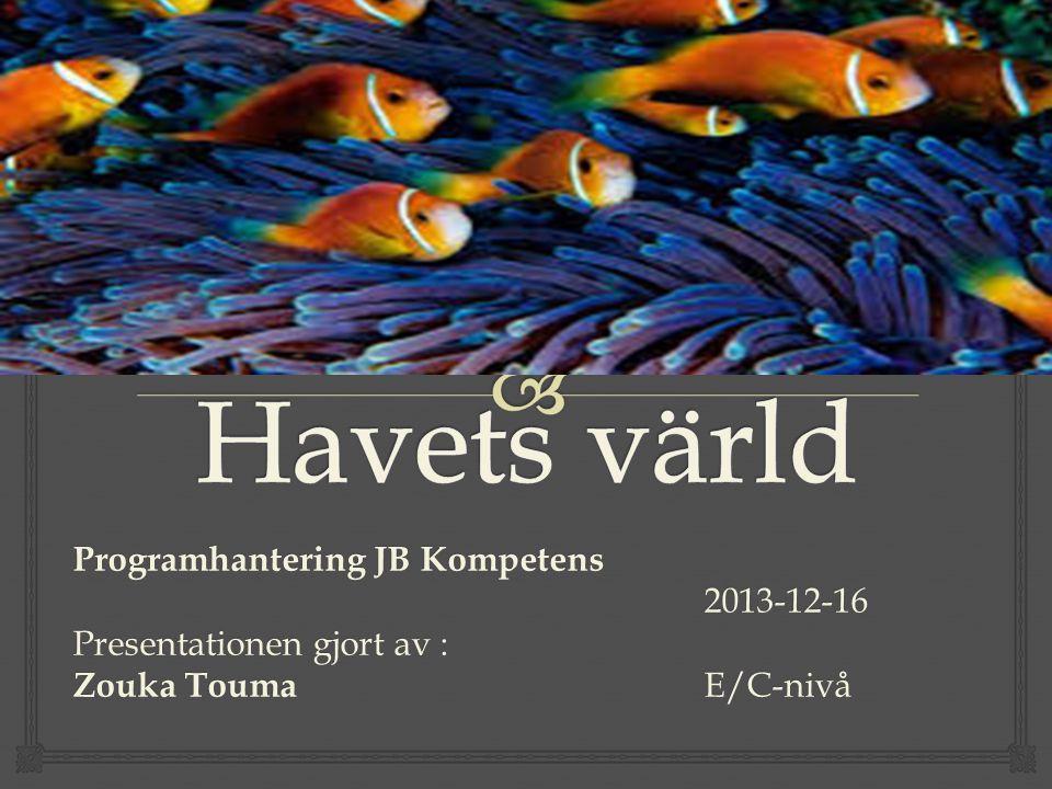 Programhantering JB Kompetens 2013-12-16 Presentationen gjort av : Zouka Touma E/C-nivå