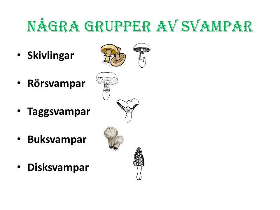 S SVampar Bildspel av Clarie Andersson
