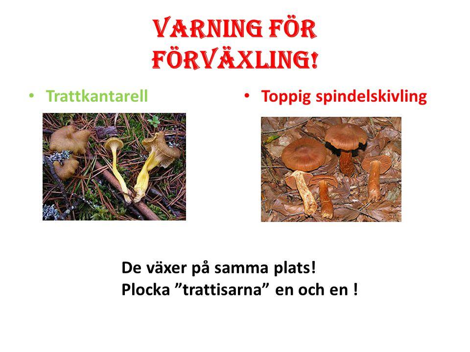 Varning för förväxling! Champinjon Vit flugsvamp Champinjonen har bruna skivor (lameller) under hatten. Vit flugsvamp har vita skivor (lameller) under