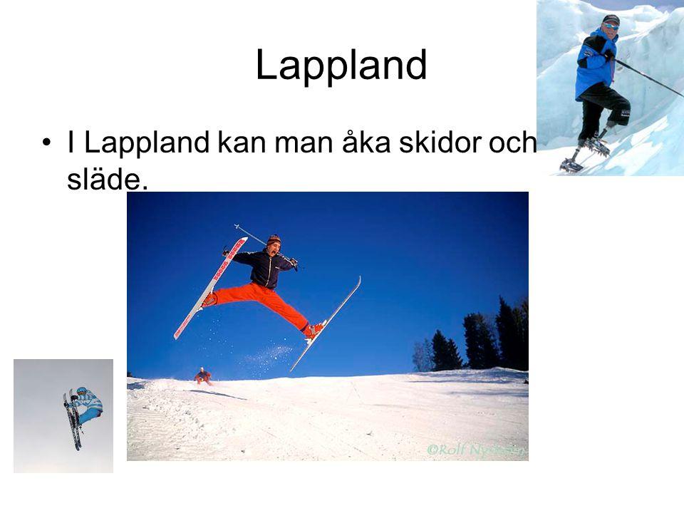 Lappland •I Lappland kan man åka skidor och åka släde.