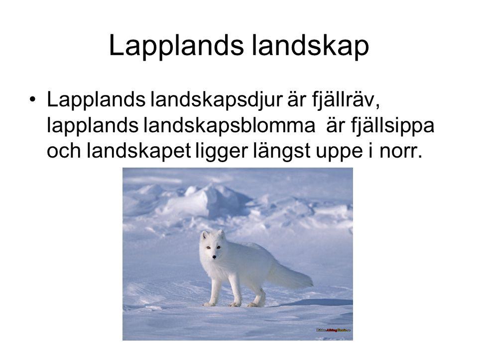 Lapplands landskap •Lapplands landskapsdjur är fjällräv, lapplands landskapsblomma är fjällsippa och landskapet ligger längst uppe i norr.