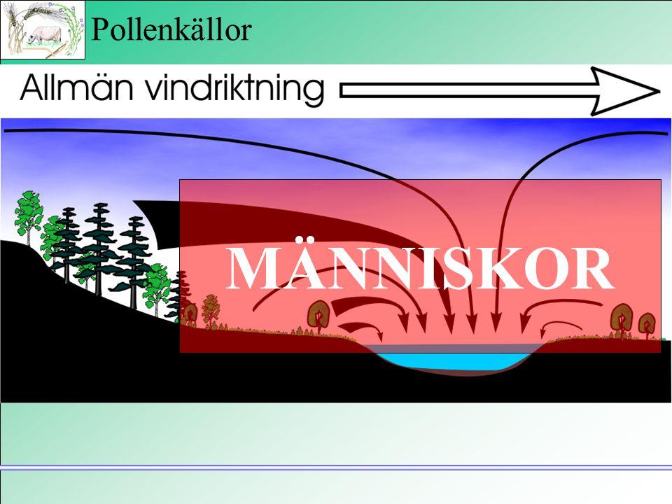 """Pollenkällor """"Pollenregn"""" Bottensediment omblandning MÄNNISKOR"""