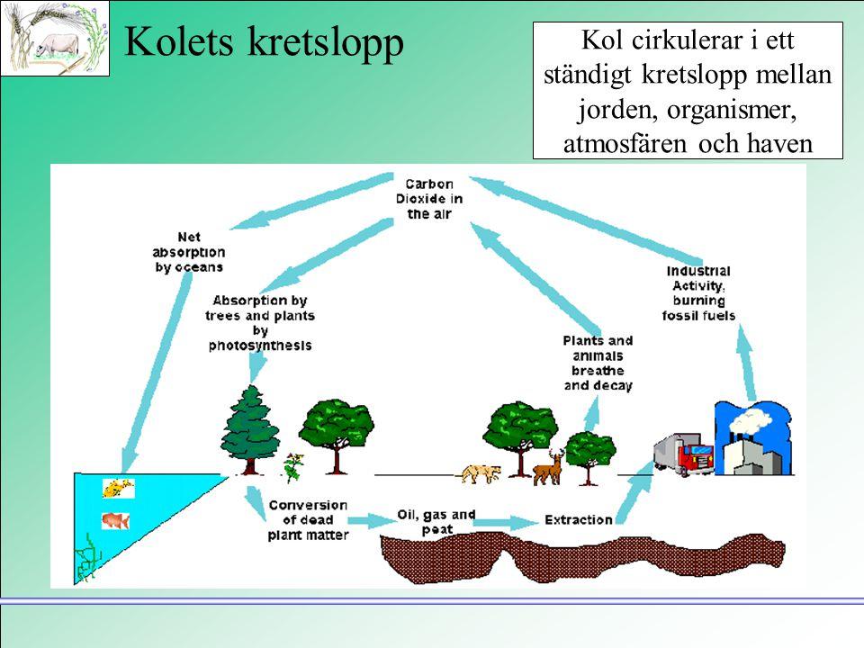 Kolets kretslopp Kol cirkulerar i ett ständigt kretslopp mellan jorden, organismer, atmosfären och haven