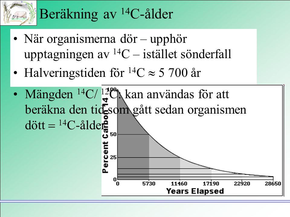 Beräkning av 14 C-ålder •När organismerna dör – upphör upptagningen av 14 C – istället sönderfall •Halveringstiden för 14 C  5 700 år •Mängden 14 C/