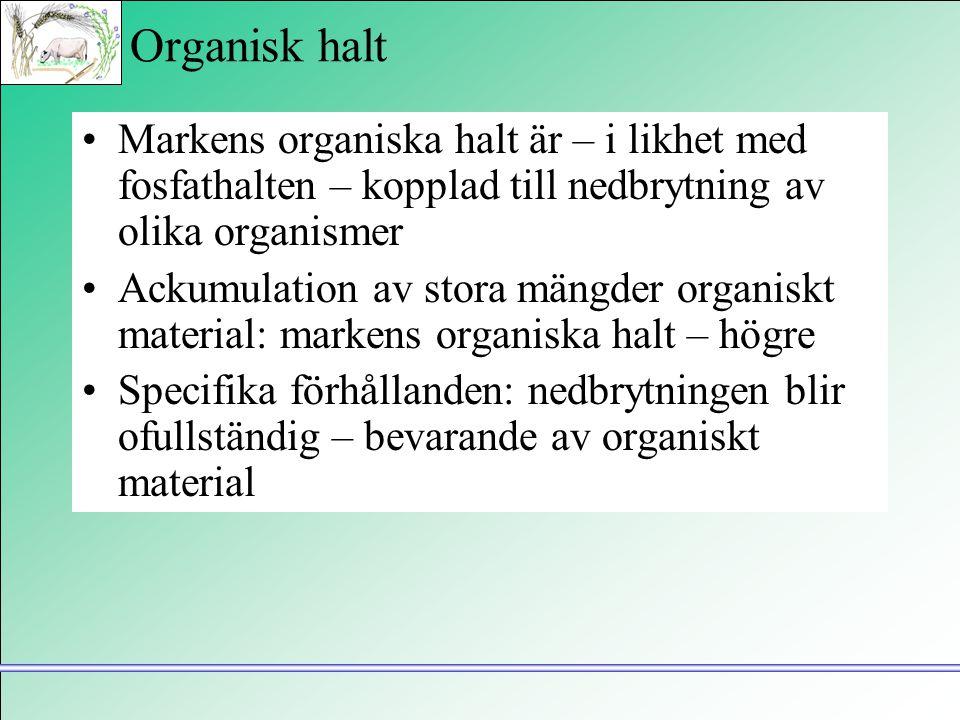 Organisk halt •Markens organiska halt är – i likhet med fosfathalten – kopplad till nedbrytning av olika organismer •Ackumulation av stora mängder org