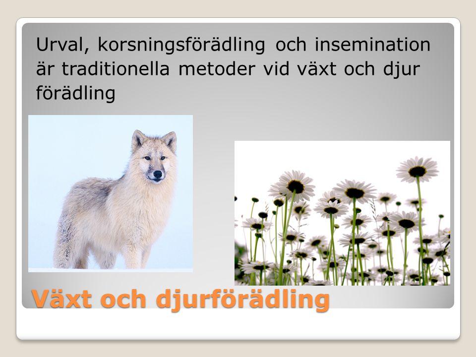 Växt och djurförädling Urval, korsningsförädling och insemination är traditionella metoder vid växt och djur förädling