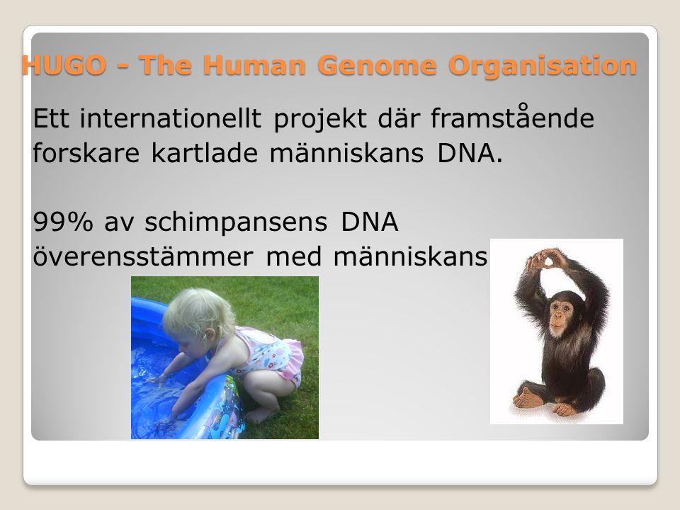 HUGO - The Human Genome Organisation Ett internationellt projekt där framstående forskare kartlade människans DNA. 99% av schimpansens DNA överensstäm