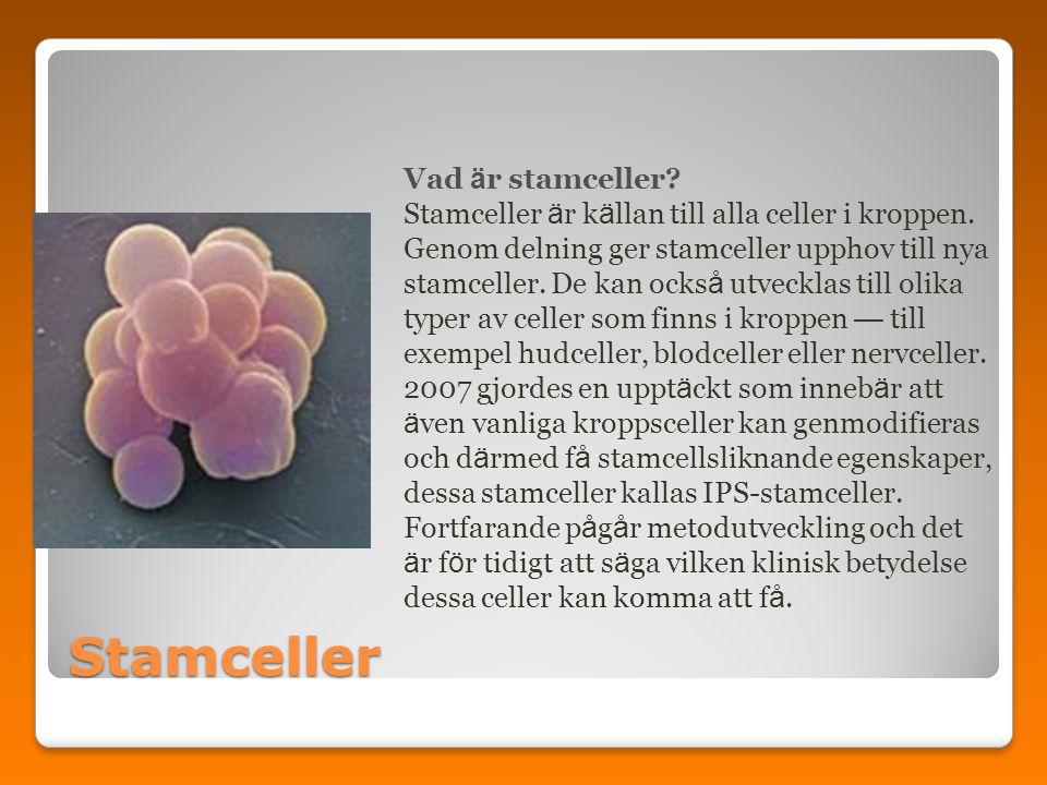 Stamceller Vad ä r stamceller? Stamceller ä r k ä llan till alla celler i kroppen. Genom delning ger stamceller upphov till nya stamceller. De kan ock