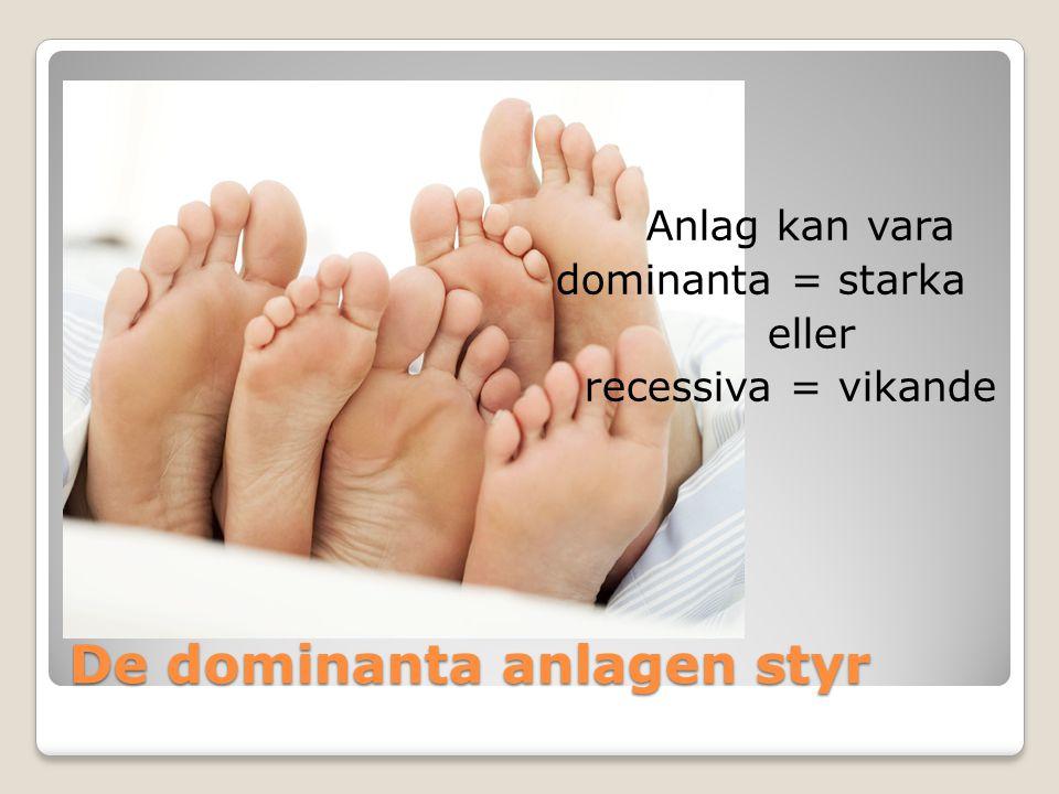 De dominanta anlagen styr Anlag kan vara dominanta = starka eller recessiva = vikande