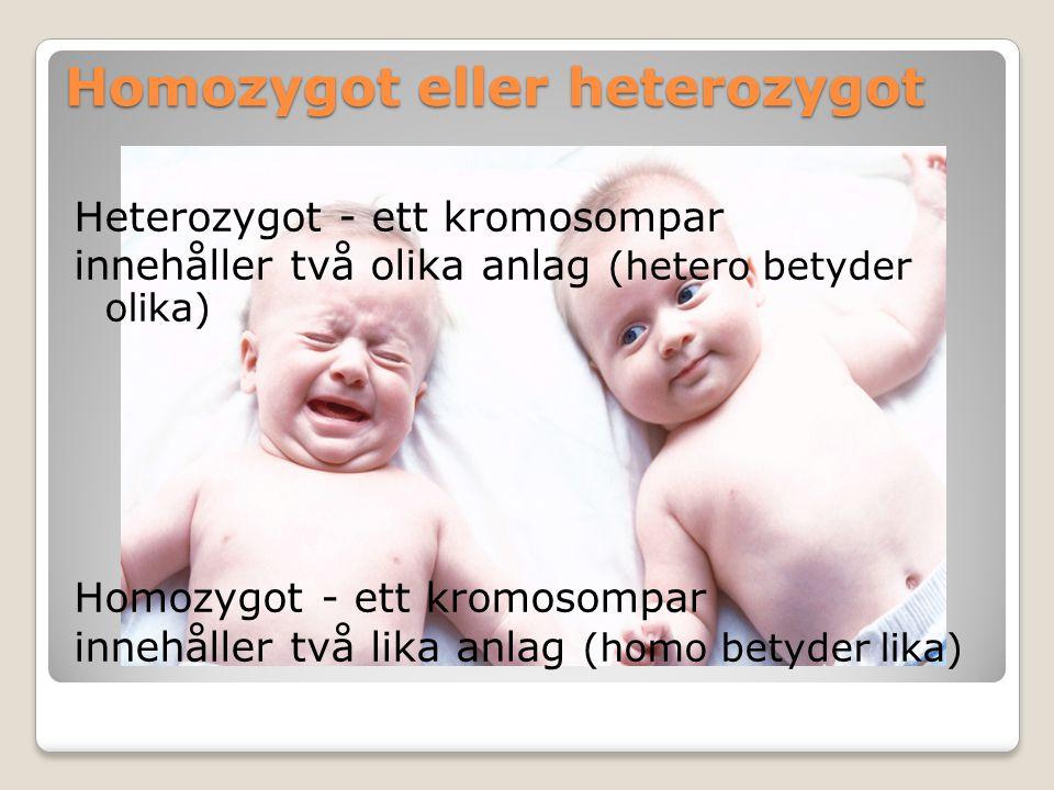 Homozygot eller heterozygot Heterozygot - ett kromosompar innehåller två olika anlag (hetero betyder olika) Homozygot - ett kromosompar innehåller två