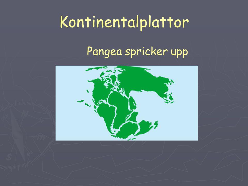 Kontinentalplattor Bevis för Pangea har vi genom att helt enkelt titta på kartan och se att kontinenterna passar ihop som ett pussel.