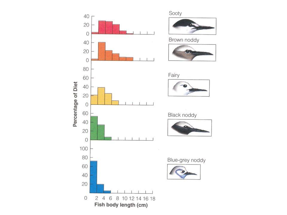 Konkurrensförmåga; r- och K-strategier •I miljöer där organismer varaktigt uppnår en numerär nära K utsätts de för K-selektion •I andra miljöer klarar dessa organismer inte att bli så många att de kommer ur den logistiska kurvans brant stigande del; de är därmed utsatta för s.k.