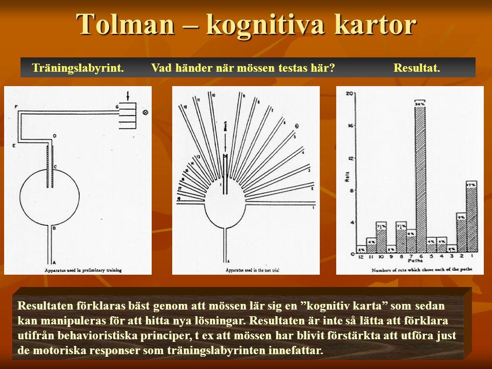 Tolman – kognitiva kartor Träningslabyrint.Vad händer när mössen testas här.