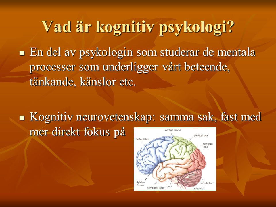 Klassiska problemområden inom kognitiv psykologi  Perception  Uppmärksamhet  Inlärning och Minne  Språk  Problemlösning  Beslutsfattande Alla dessa fenomen återfinns i en oändlig mängd situationer.