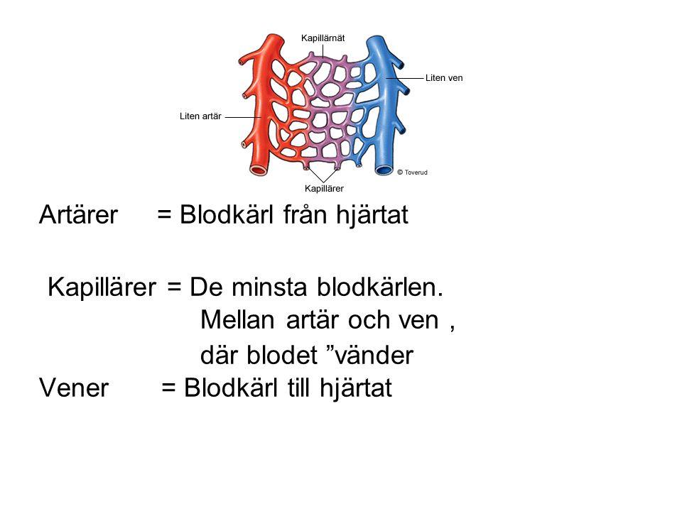 """Artärer = Blodkärl från hjärtat Kapillärer = De minsta blodkärlen. Mellan artär och ven, där blodet """"vänder Vener = Blodkärl till hjärtat"""