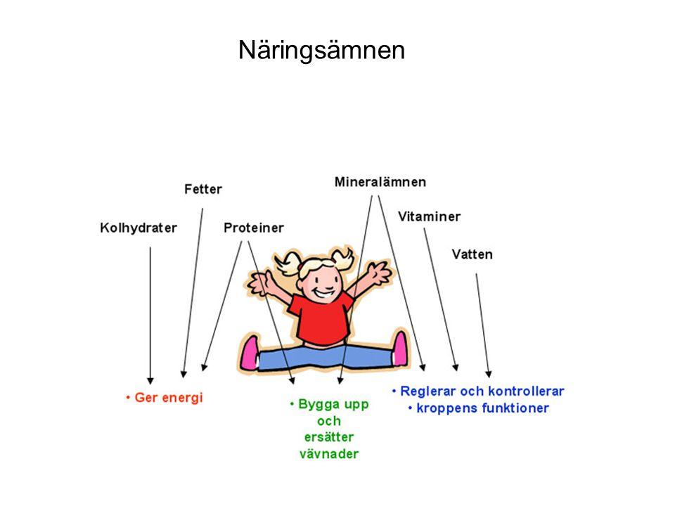 Blodet passerar olika organ I det stora kretsloppet passerar blodet tarmarna.