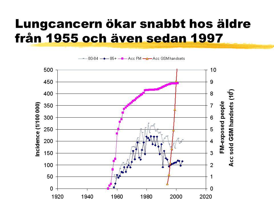 Lungcancern ökar snabbt hos äldre från 1955 och även sedan 1997