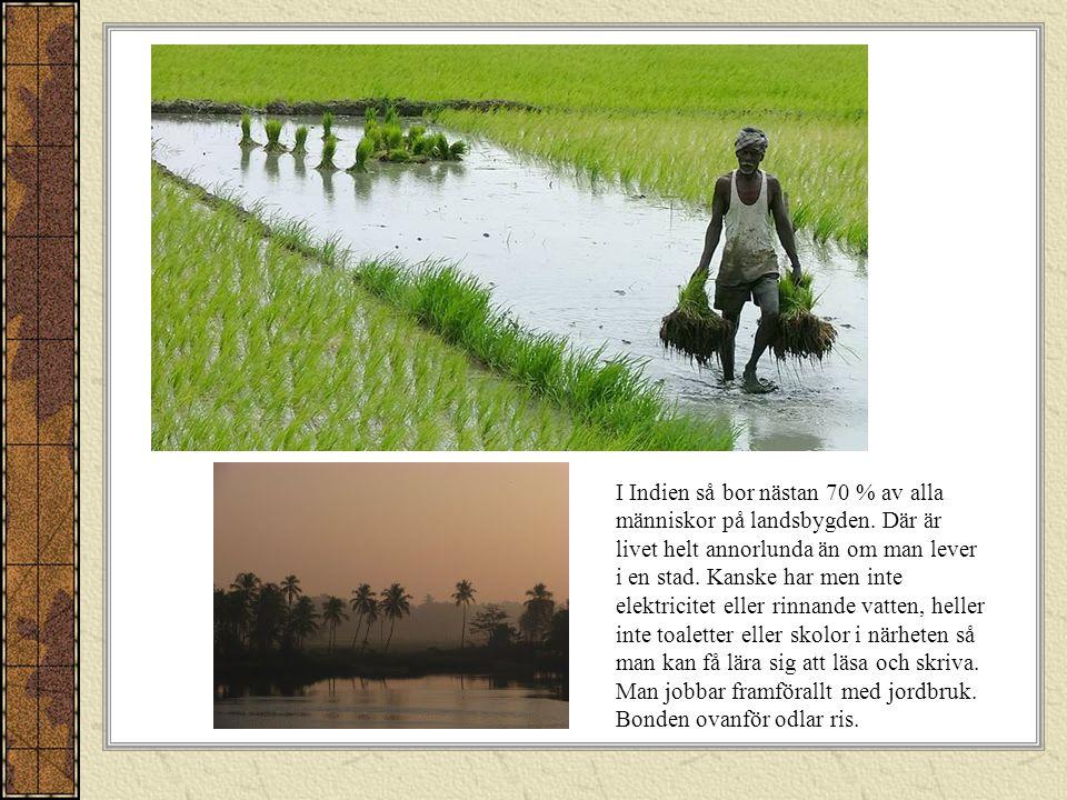 I Indien så bor nästan 70 % av alla människor på landsbygden.