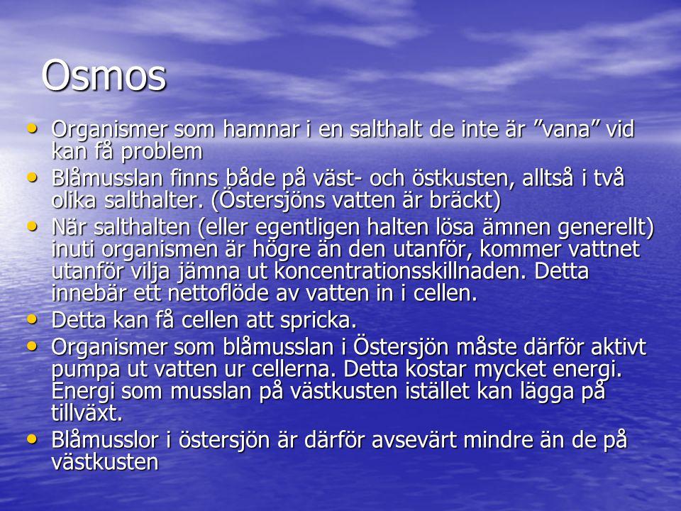 """Osmos • Organismer som hamnar i en salthalt de inte är """"vana"""" vid kan få problem • Blåmusslan finns både på väst- och östkusten, alltså i två olika sa"""