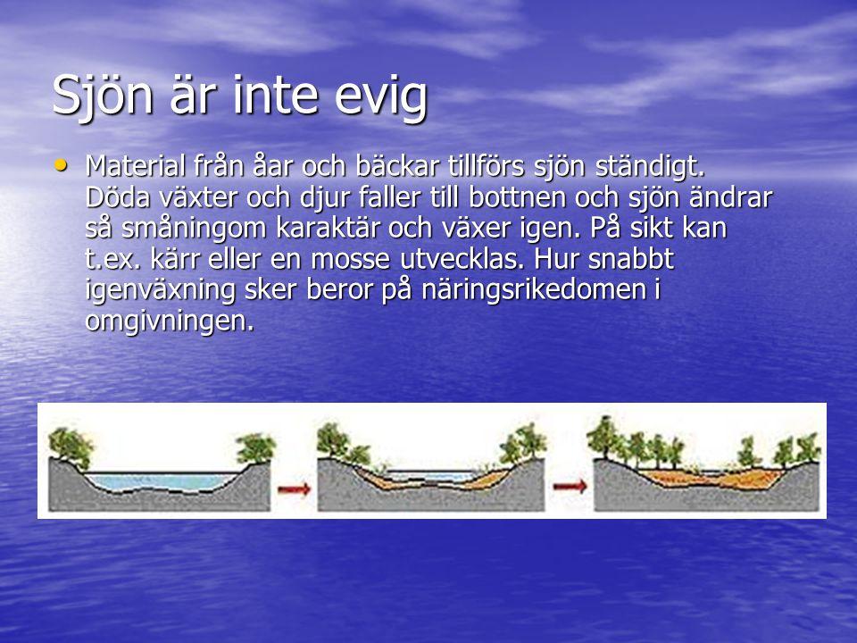 Sjön är inte evig • Material från åar och bäckar tillförs sjön ständigt. Döda växter och djur faller till bottnen och sjön ändrar så småningom karaktä