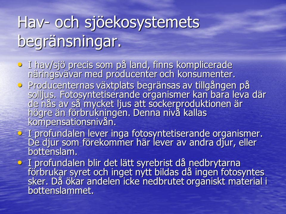 Hav- och sjöekosystemets begränsningar. • I hav/sjö precis som på land, finns komplicerade näringsvävar med producenter och konsumenter. • Producenter