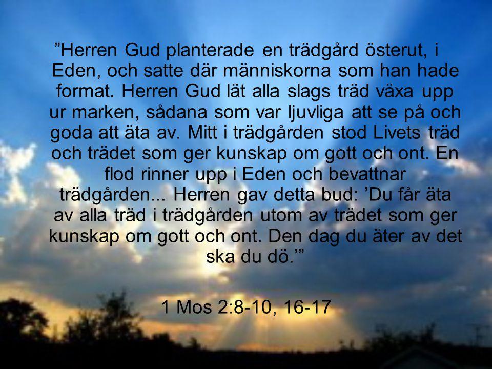 """""""Herren Gud planterade en trädgård österut, i Eden, och satte där människorna som han hade format. Herren Gud lät alla slags träd växa upp ur marken,"""