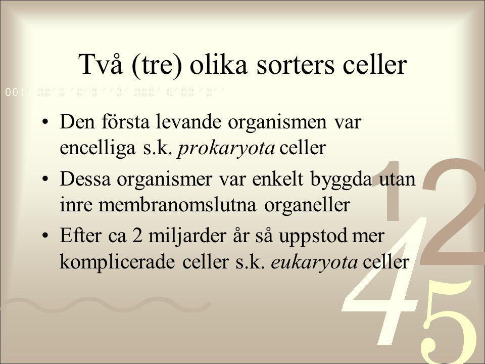 Två (tre) olika sorters celler •Den första levande organismen var encelliga s.k. prokaryota celler •Dessa organismer var enkelt byggda utan inre membr