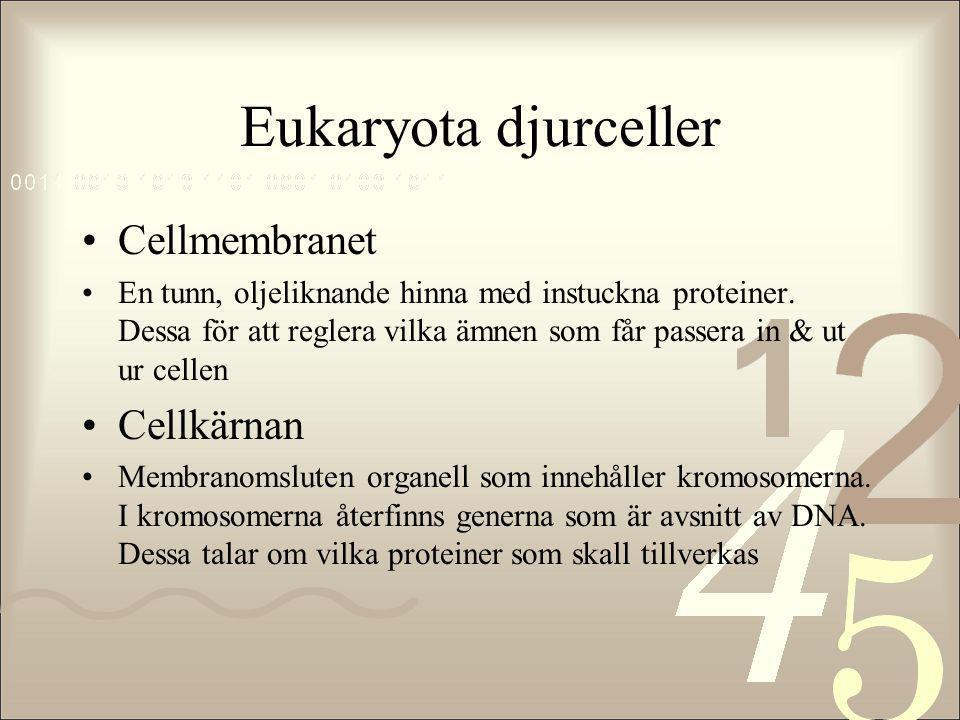 Eukaryota djurceller •Cellmembranet •En tunn, oljeliknande hinna med instuckna proteiner. Dessa för att reglera vilka ämnen som får passera in & ut ur