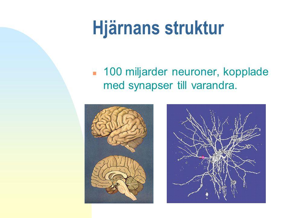 Hjärnans struktur n 100 miljarder neuroner, kopplade med synapser till varandra.