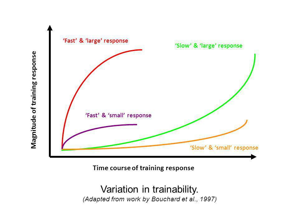 Variation in trainability. (Adapted from work by Bouchard et al., 1997) Magnitude of training response Time course of training response 'Fast' & 'larg
