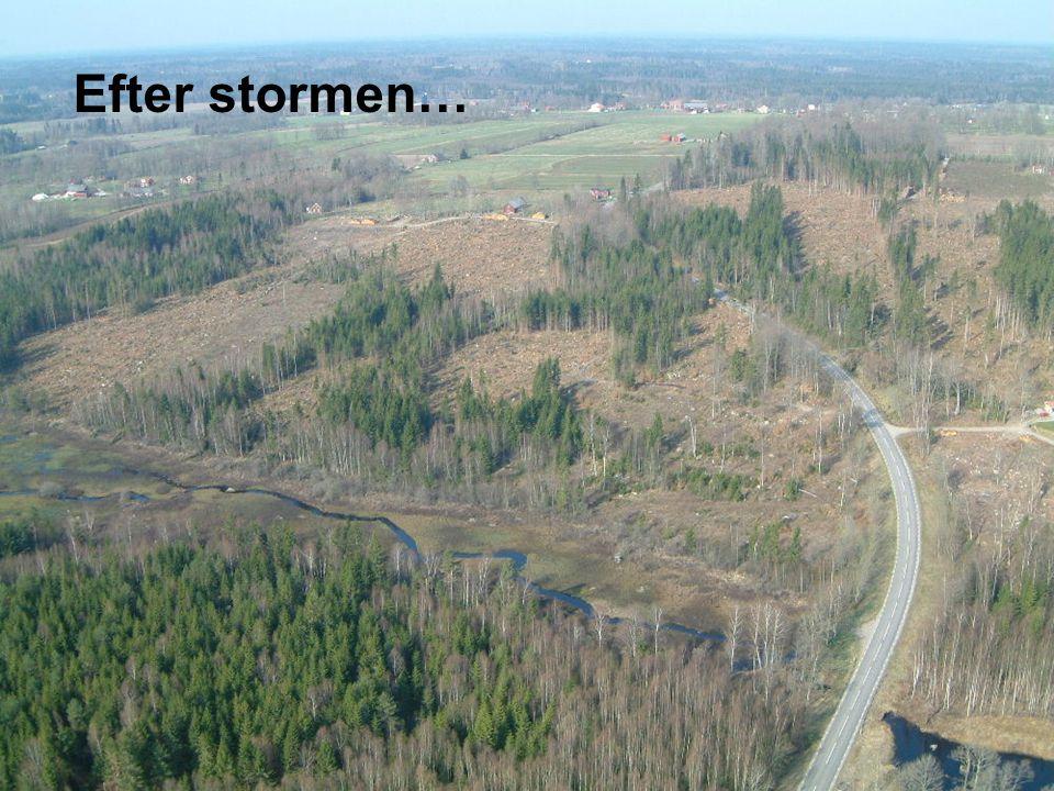 Södra Skog 2005-09-14  Ökat fokus på: •skötseln av sönderblåsta bestånd ( restbestånd ) •att gallring i praktisk handling utförs på rätt sätt och i rätt tid •att röjning utförs i större omfattning och tillräckligt hårt •kantzonernas skötsel •att dikesunderhåll (dikesrensning) utförs i ökad omfattning • metoder för anläggning av skog, inklusive tillgång till lämpligt odlingsmaterial •att minska risken för skador av granbarkborre •att minska risken för skador av snytbagge •att informera om risker för stormskador Skogen efter stormen