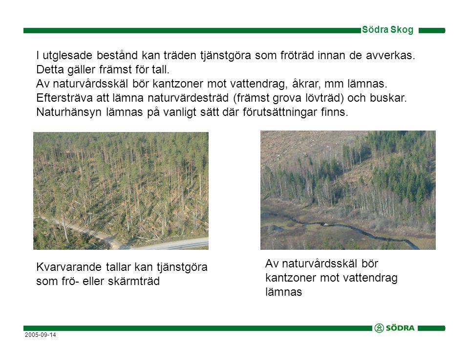 Södra Skog 2005-09-14 Kvarvarande tallar kan tjänstgöra som frö- eller skärmträd Av naturvårdsskäl bör kantzoner mot vattendrag lämnas I utglesade bestånd kan träden tjänstgöra som fröträd innan de avverkas.