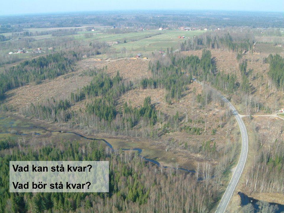 Södra Skog 2005-09-14 Vad kan stå kvar? Vad bör stå kvar?