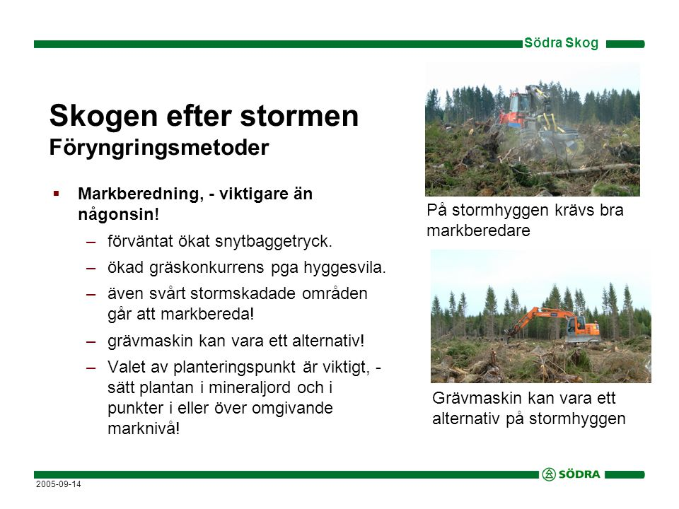 Södra Skog 2005-09-14 Skogen efter stormen Föryngringsmetoder  Markberedning, - viktigare än någonsin.