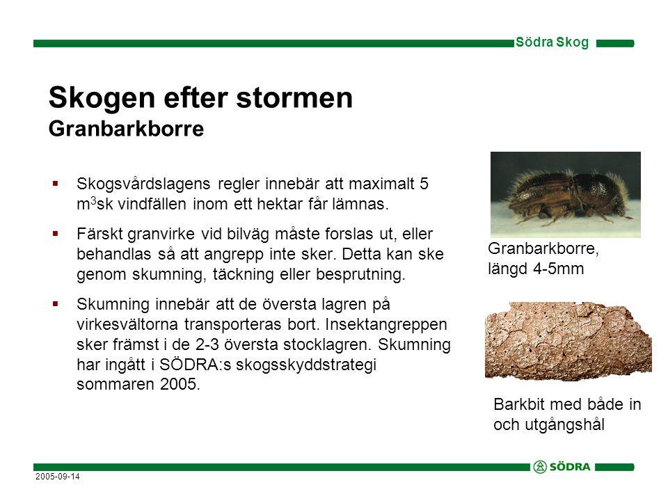Södra Skog 2005-09-14 Skogen efter stormen Granbarkborre  Skogsvårdslagens regler innebär att maximalt 5 m 3 sk vindfällen inom ett hektar får lämnas.