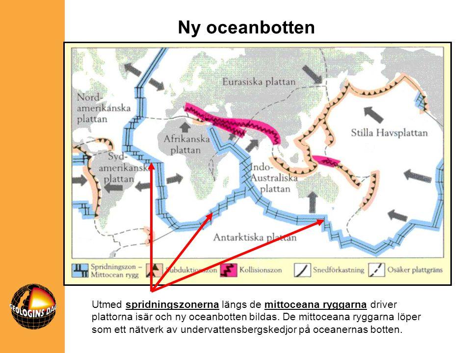 Utmed spridningszonerna längs de mittoceana ryggarna driver plattorna isär och ny oceanbotten bildas. De mittoceana ryggarna löper som ett nätverk av