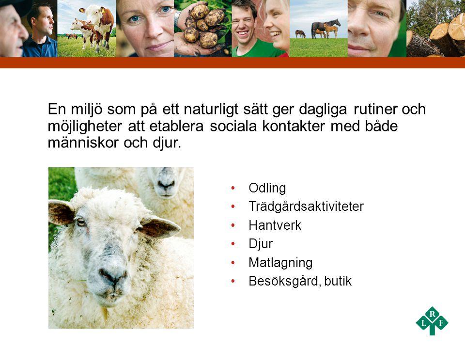 En miljö som på ett naturligt sätt ger dagliga rutiner och möjligheter att etablera sociala kontakter med både människor och djur. •Odling •Trädgårdsa