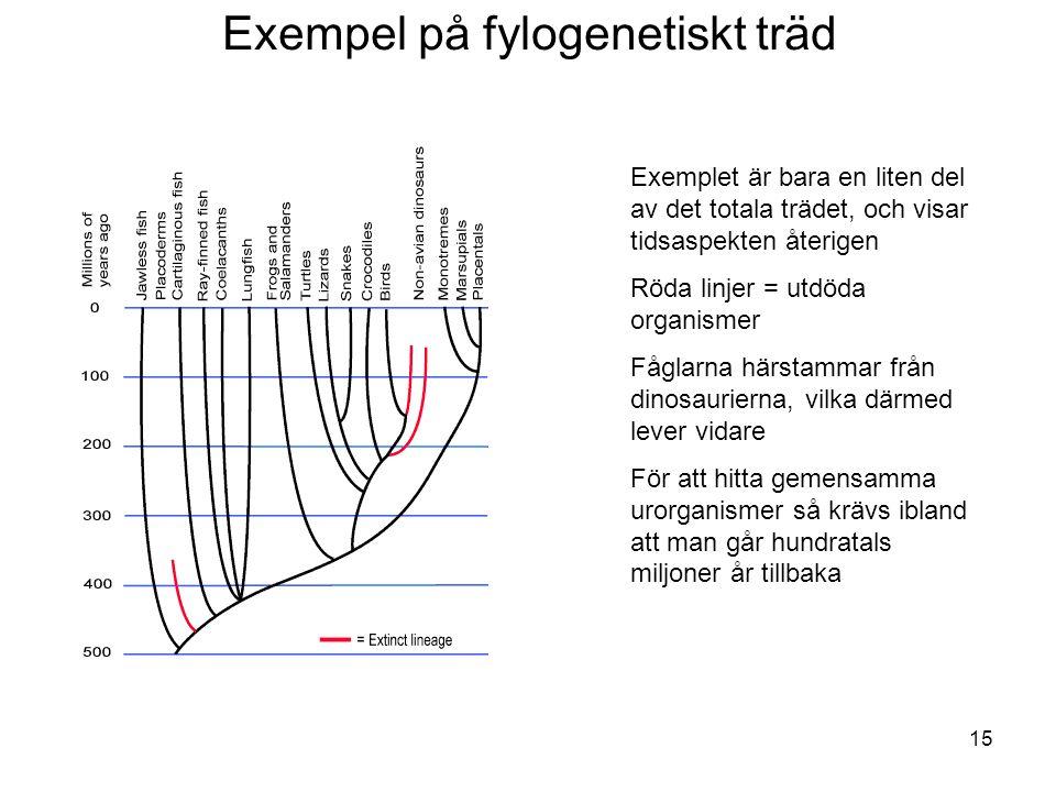 15 Exempel på fylogenetiskt träd Exemplet är bara en liten del av det totala trädet, och visar tidsaspekten återigen Röda linjer = utdöda organismer F