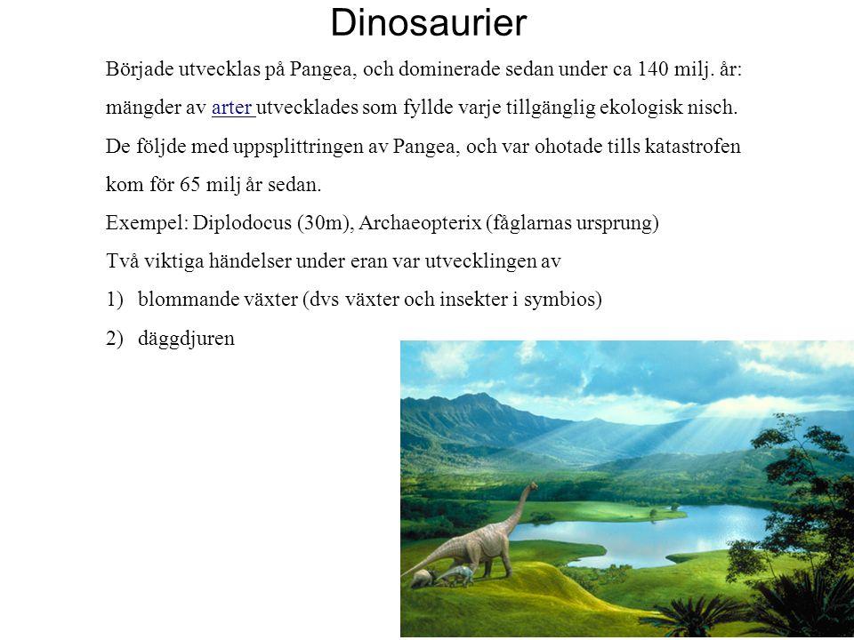 17 Dinosaurier Började utvecklas på Pangea, och dominerade sedan under ca 140 milj. år: mängder av arter utvecklades som fyllde varje tillgänglig ekol