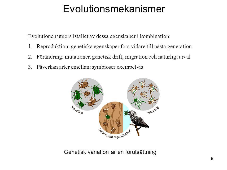 10 En mutation ger brun skalbaggeEn brun bagge migrerar, andelen bruna baggar ökar i den gröna gruppen Genetisk drift pga slumpmässig händelse Fågeln ser gröna baggar bättre, naturligt urval till förmån för brun bagge Evolutionsmekanismer
