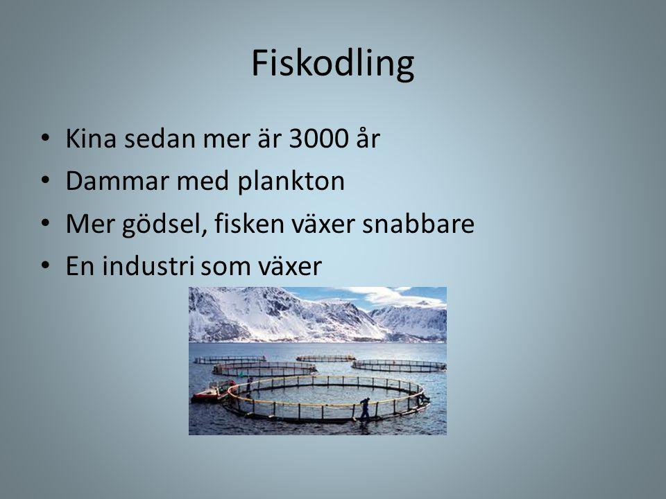 Fiskodling • Kina sedan mer är 3000 år • Dammar med plankton • Mer gödsel, fisken växer snabbare • En industri som växer