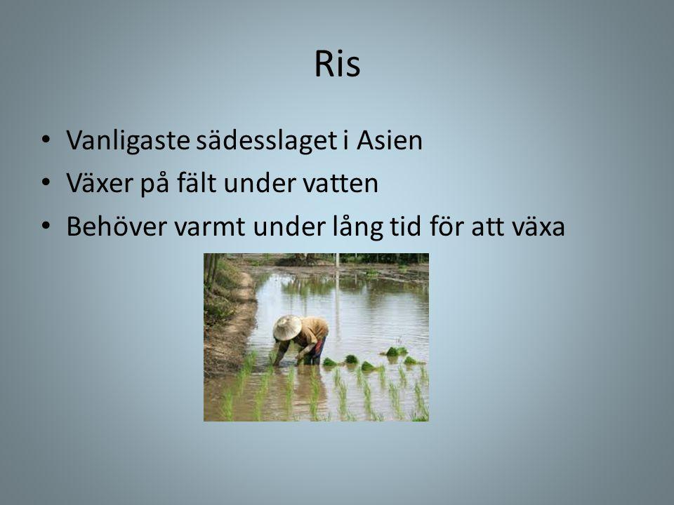 Ris • Vanligaste sädesslaget i Asien • Växer på fält under vatten • Behöver varmt under lång tid för att växa