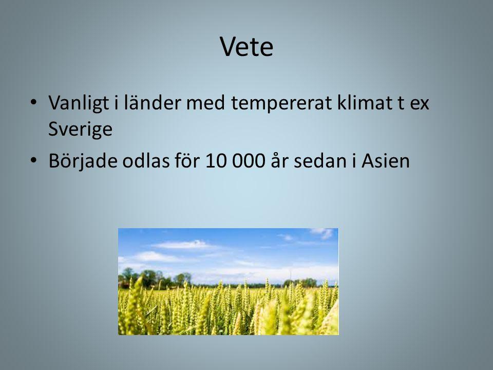 Vete • Vanligt i länder med tempererat klimat t ex Sverige • Började odlas för 10 000 år sedan i Asien