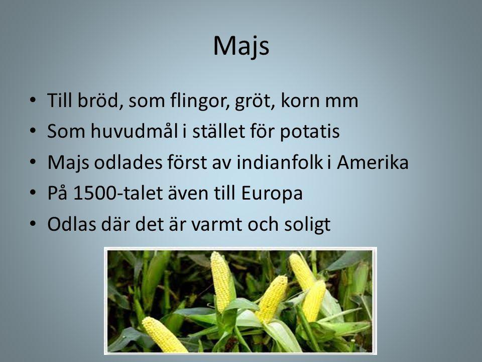 Majs • Till bröd, som flingor, gröt, korn mm • Som huvudmål i stället för potatis • Majs odlades först av indianfolk i Amerika • På 1500-talet även ti