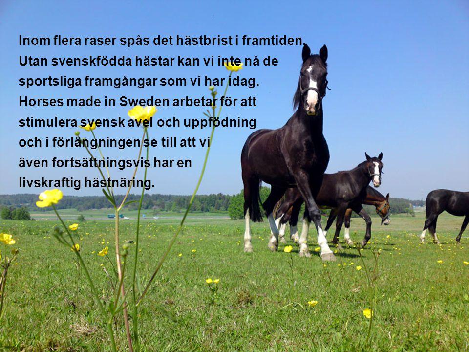 PRATA MED EN RÖST PÅ OLIKA NIVÅER – NÅGRA TIPS HEMSIDAN •Skriv om Horses made in Sweden på hemsidan och beskriv gärna varför just din organisation tycker att det viktigt att lyfta fram svenskfödda hästar.