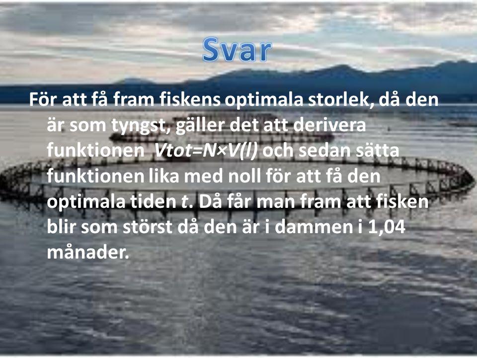 För att få fram fiskens optimala storlek, då den är som tyngst, gäller det att derivera funktionen Vtot=N×V(l) och sedan sätta funktionen lika med nol