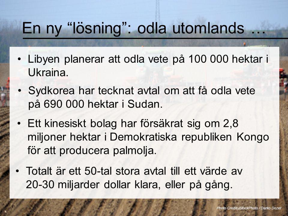 """En ny """"lösning"""": odla utomlands … •Libyen planerar att odla vete på 100 000 hektar i Ukraina. Photo Credit: iStockPhoto / Darko Dozet •Sydkorea har te"""