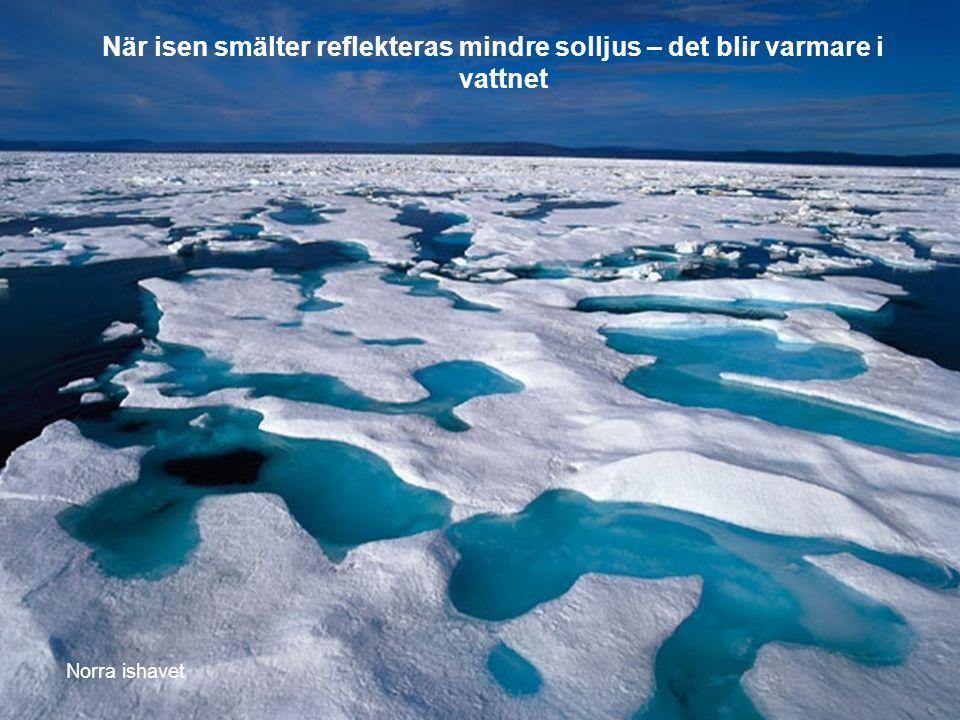 Norra ishavet När isen smälter reflekteras mindre solljus – det blir varmare i vattnet