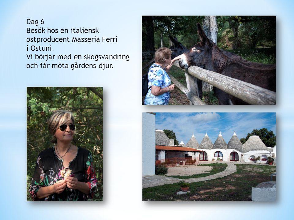 Dag 6 Besök hos en italiensk ostproducent Masseria Ferri i Ostuni. Vi börjar med en skogsvandring och får möta gårdens djur.