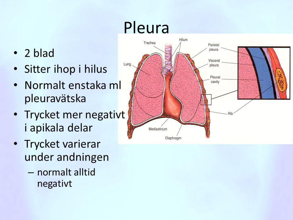 Pleura • 2 blad • Sitter ihop i hilus • Normalt enstaka ml pleuravätska • Trycket mer negativt i apikala delar • Trycket varierar under andningen – no